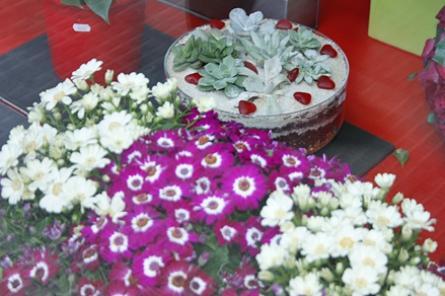 Flores pandora Fotos