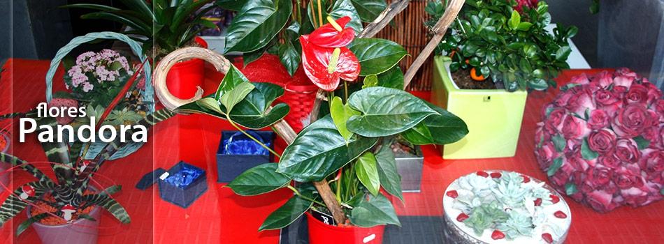 Flores pandora