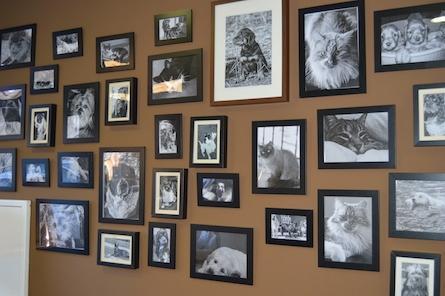 Tierna Centro de Salud Veterinaria Fotos