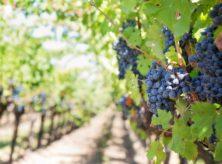 Octubre, el mes del vino
