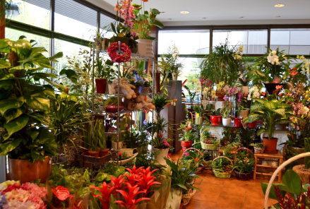 Floricultura Castilla 2 en La Marina Fotos