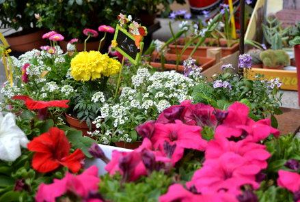 Floricultura Castilla Fotos